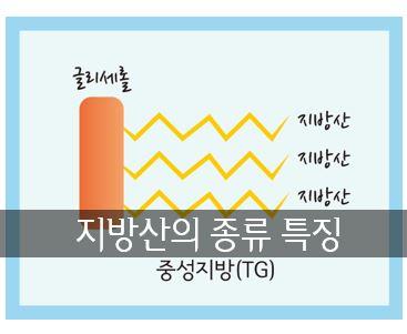 지방산의 종류 특징